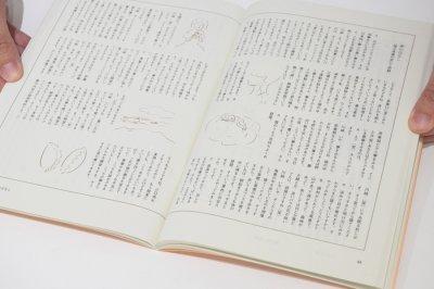 画像5: 体操をつくる / 川崎智子・鶴崎いづみ